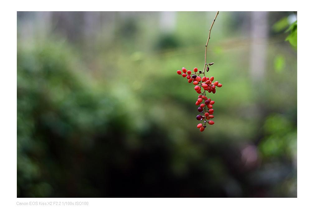 leonyeh作品:红