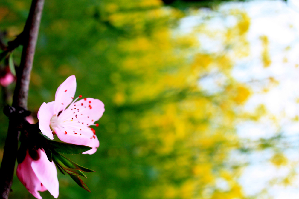 Musketiere作品:春天印象
