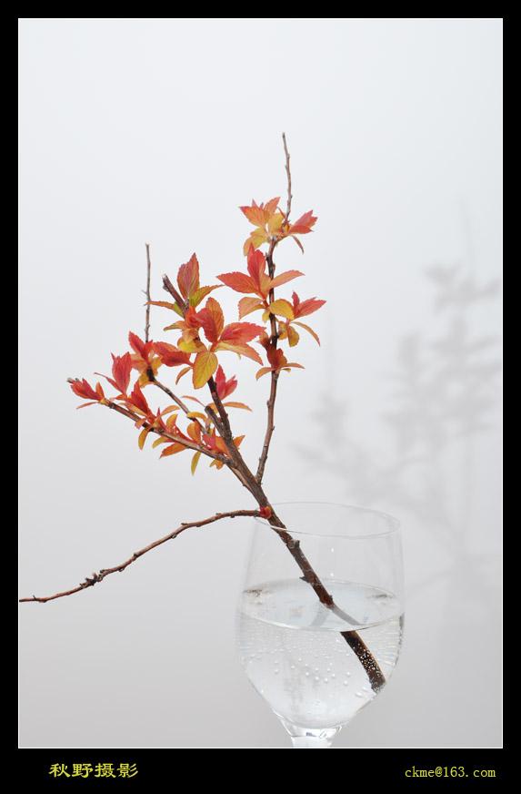 秋天的原野作品:春之曲