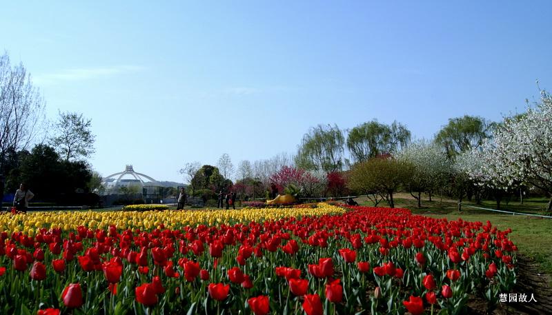 慧园故人作品:春天的旋律