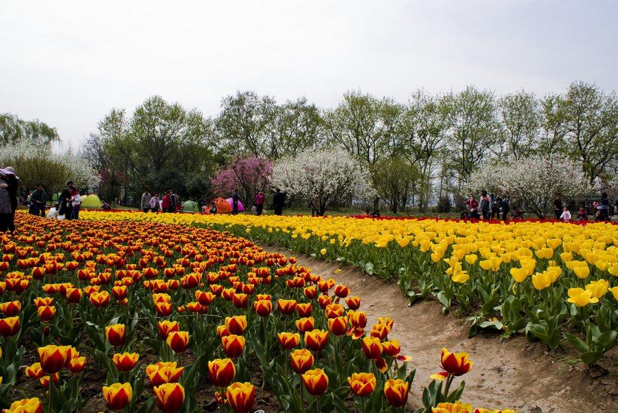 色影狙击手作品:炫彩之春