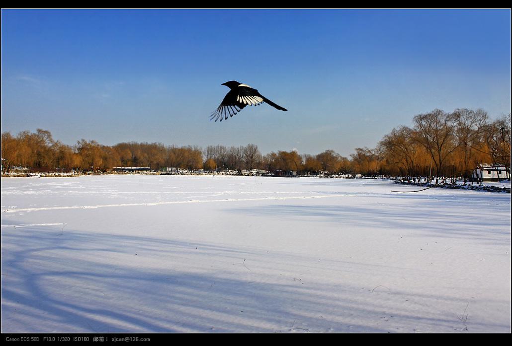 xiemomo作品:有鸟的风景