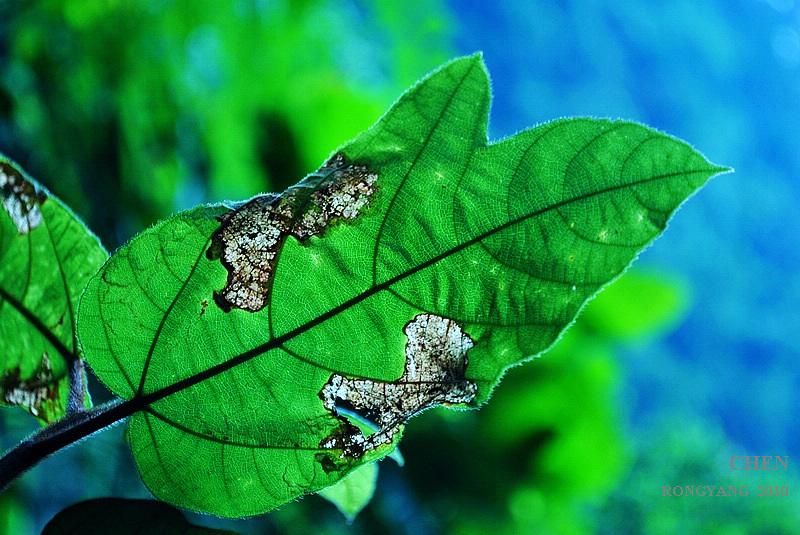 色界无度作品:受伤的叶子