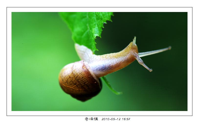gland作品:蜗牛