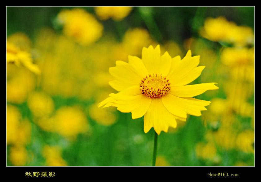 秋天的原野作品:心中的太阳