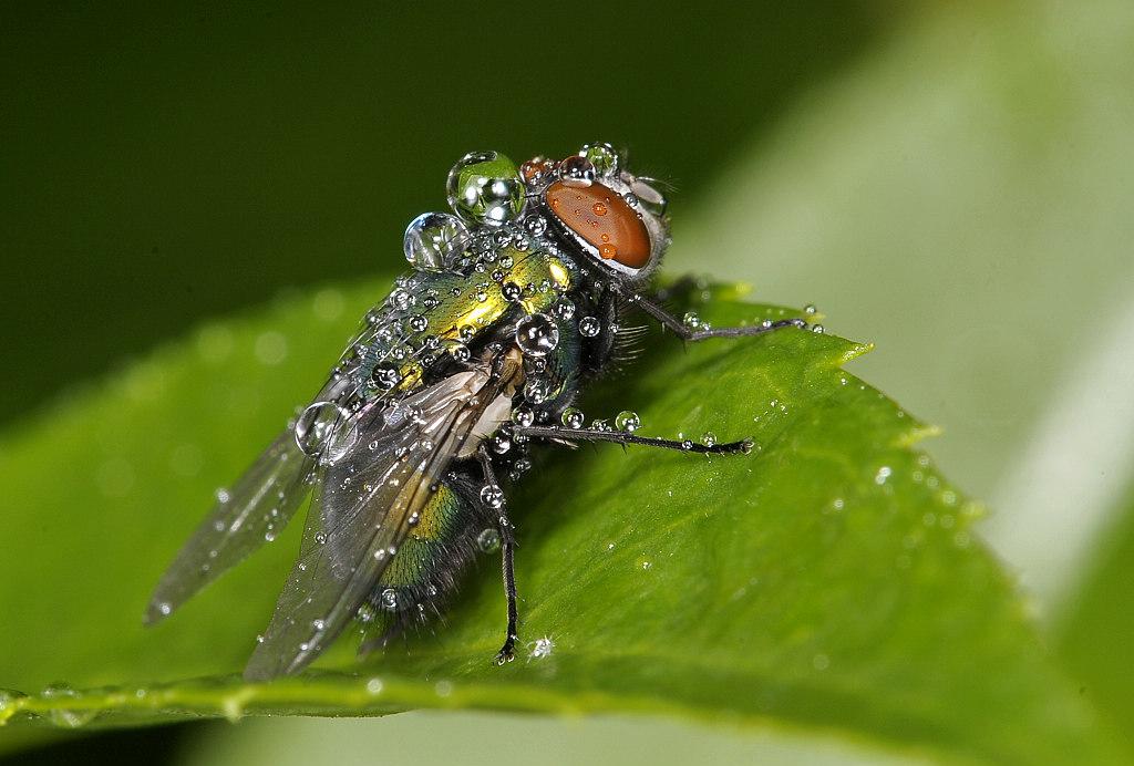 爱吃黄瓜作品:雨后苍蝇