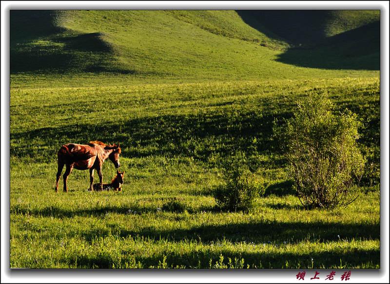 坝上老张作品:草原牧歌—守护