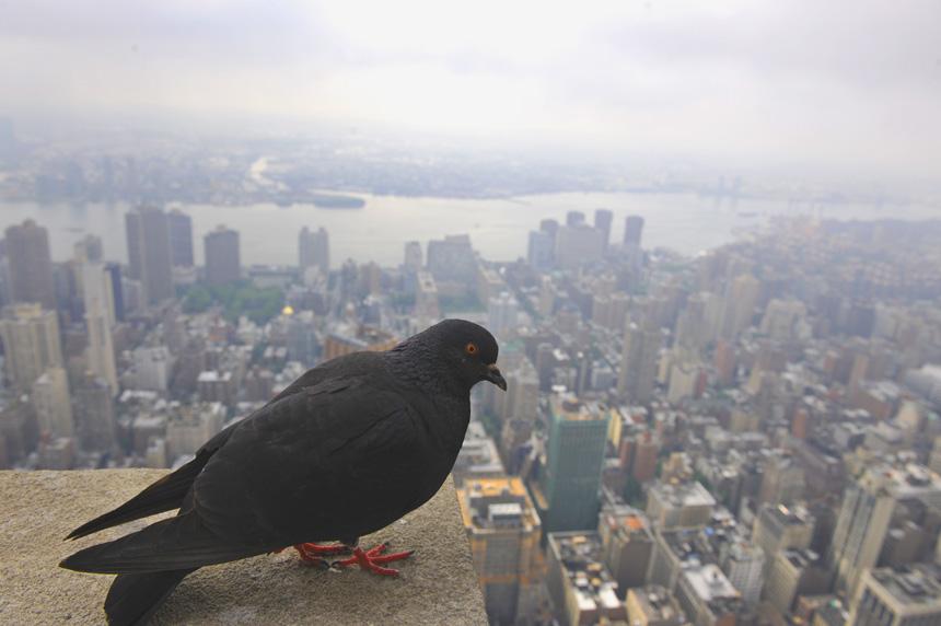 SNSF作品:鸟看纽约