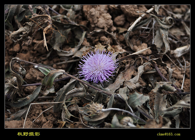 秋天的原野作品:沙漠之花