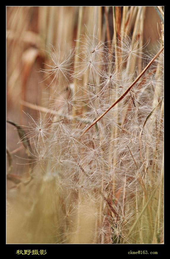 秋天的原野作品:毛毛飞到家