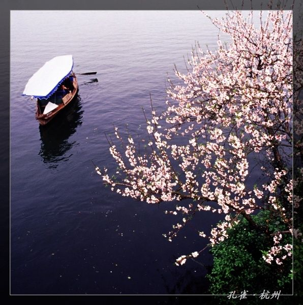 孔雀作品:桃花流水