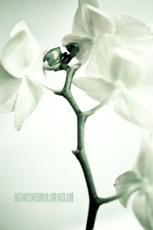 ROCK101作品:蝴蝶·兰