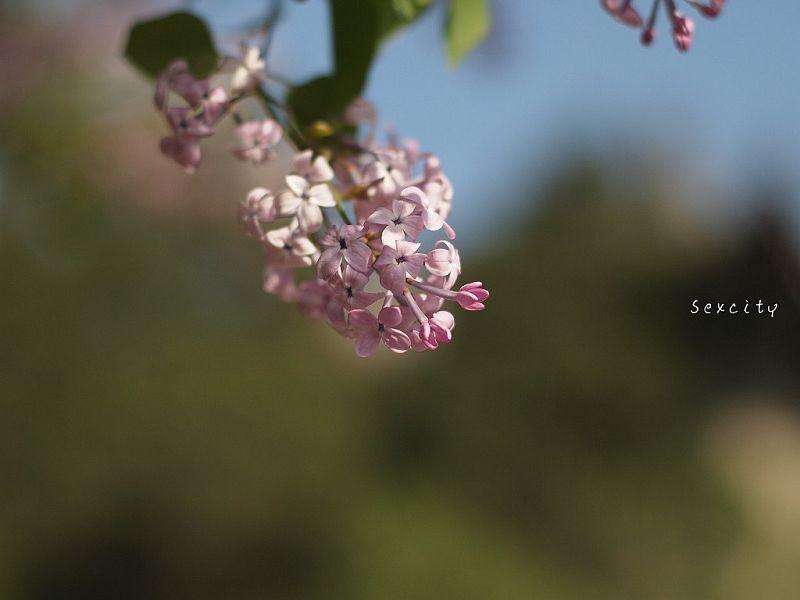 Sexcity作品:碎花
