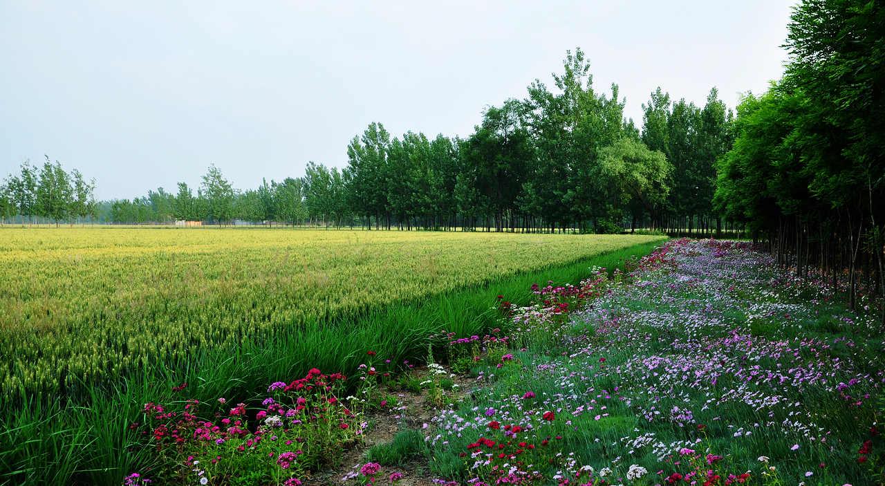 世纪金鼎作品:鲜花盛开的田野