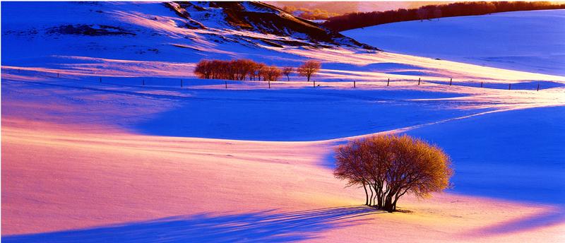 w901作品:坝上冬雪