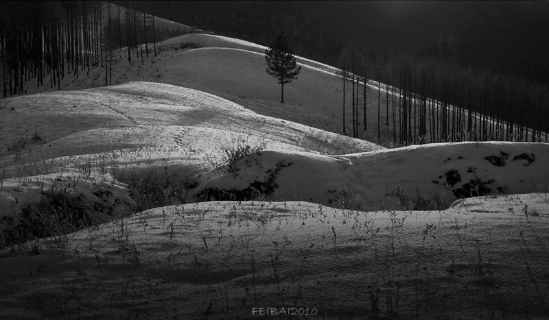 飞白2010作品:寒山