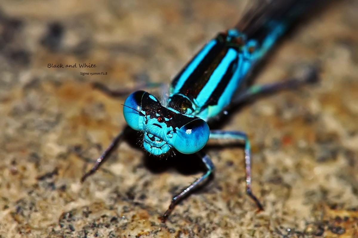 blackANDwhite作品:蓝眼睛