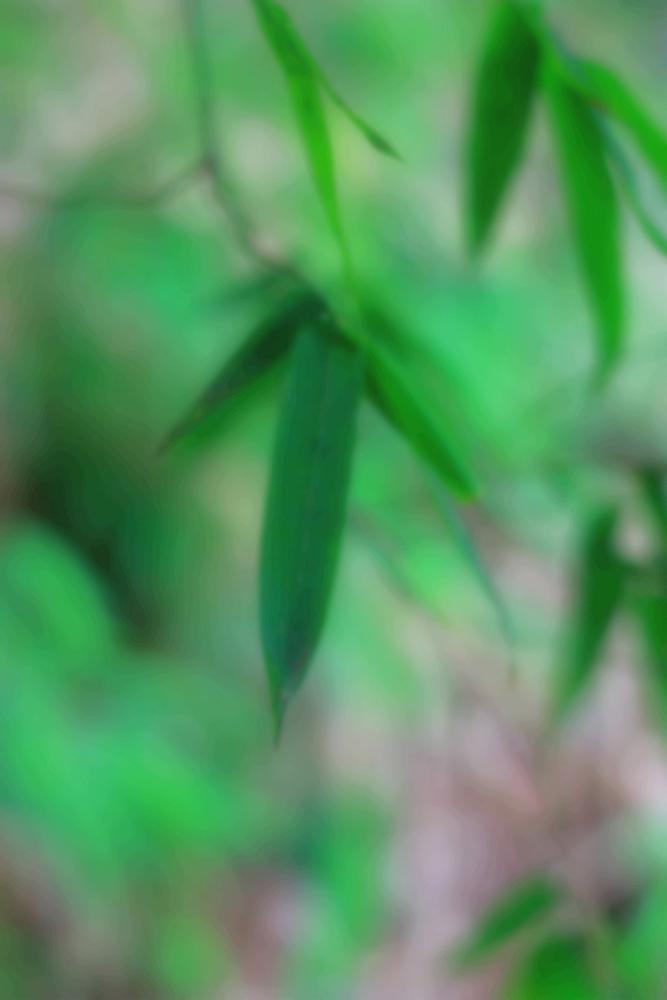 午后茶饮作品:印象·竹叶