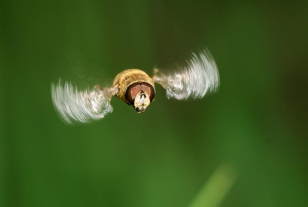 刹车灯作品:食蚜蝇 1