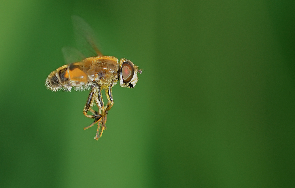 刹车灯作品:食蚜蝇 2