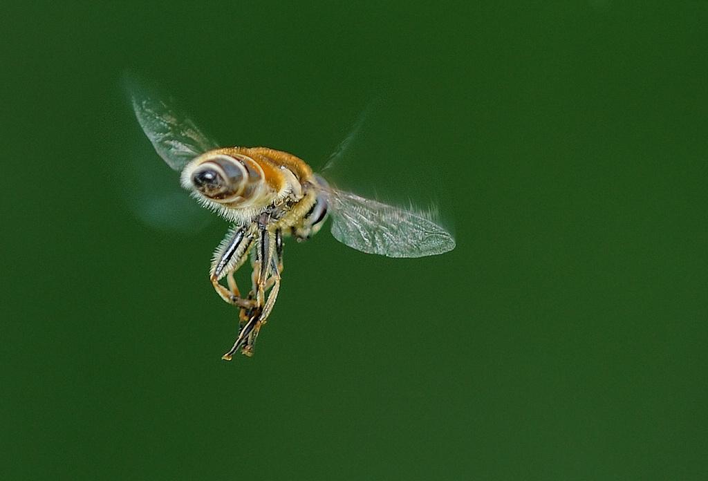 刹车灯作品:食蚜蝇 3