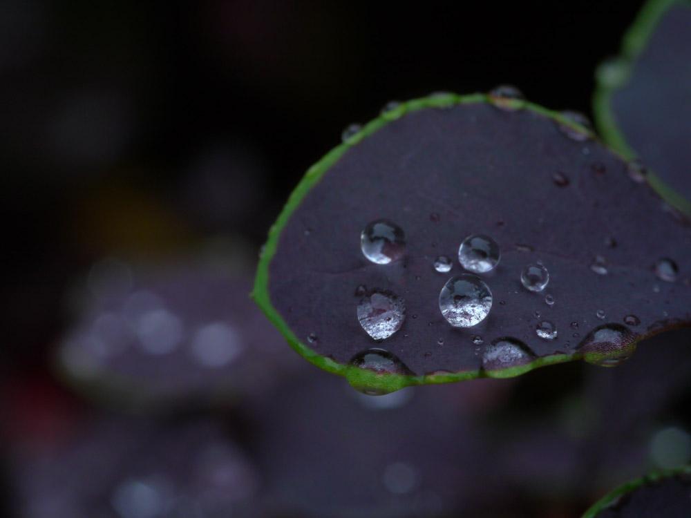 kotea作品:风吹过的下雨天3