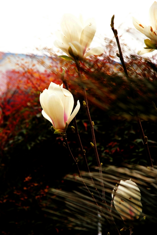 南山一望作品:温暖花园