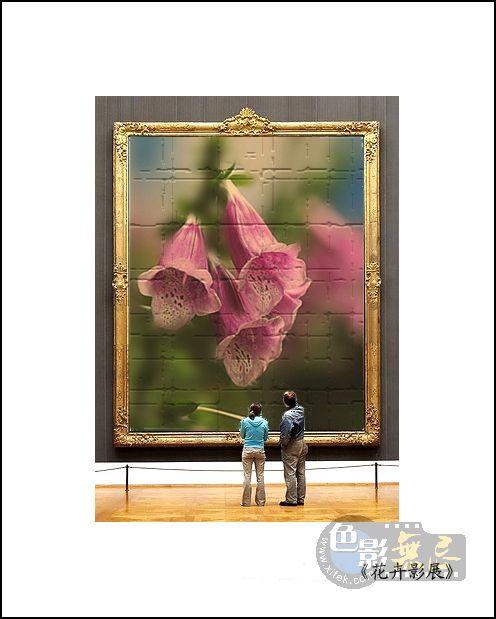 四季春作品:花卉影展