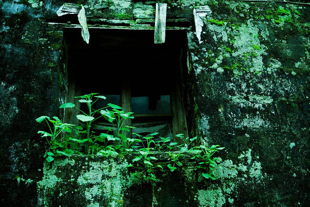 海上麦客作品:绿墙