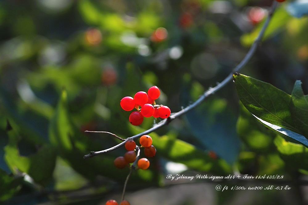良晨玫景作品:秋天--硕果