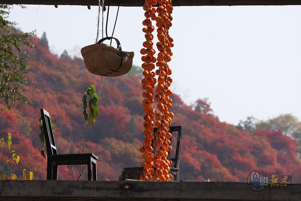 宗山作品:秋收