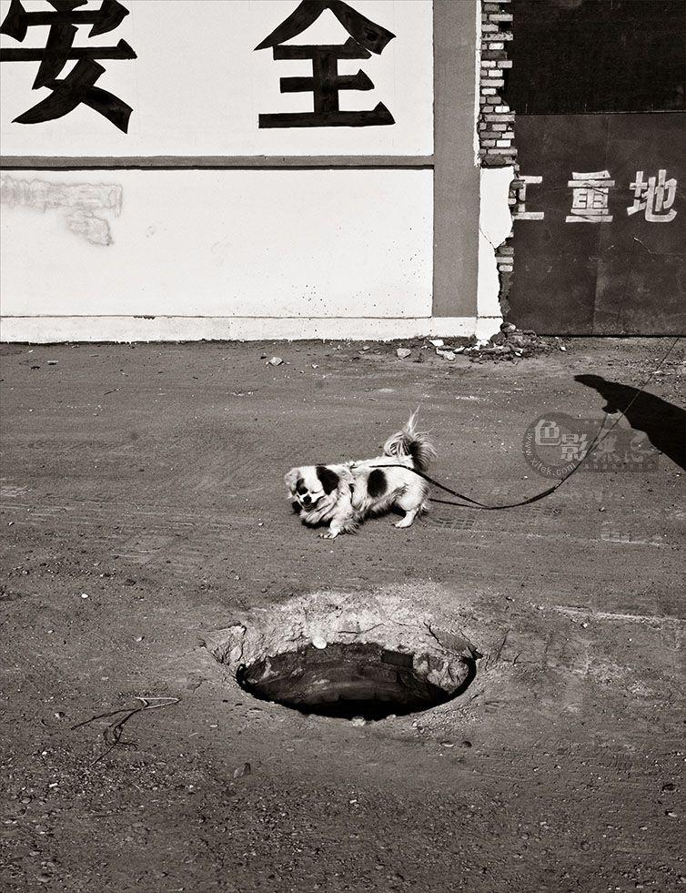 通铺异梦作品:小狗领路  2010