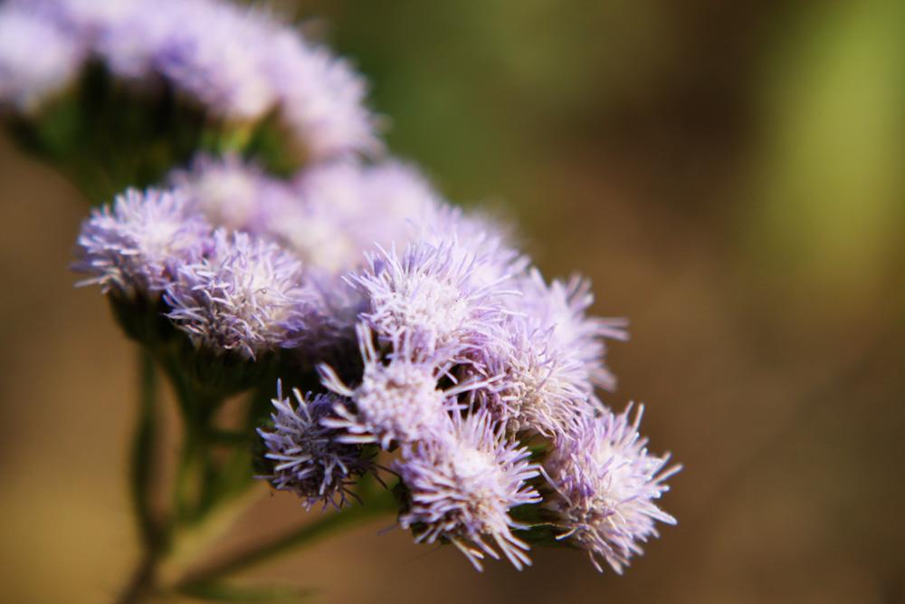 doumeng作品:入冬的花儿