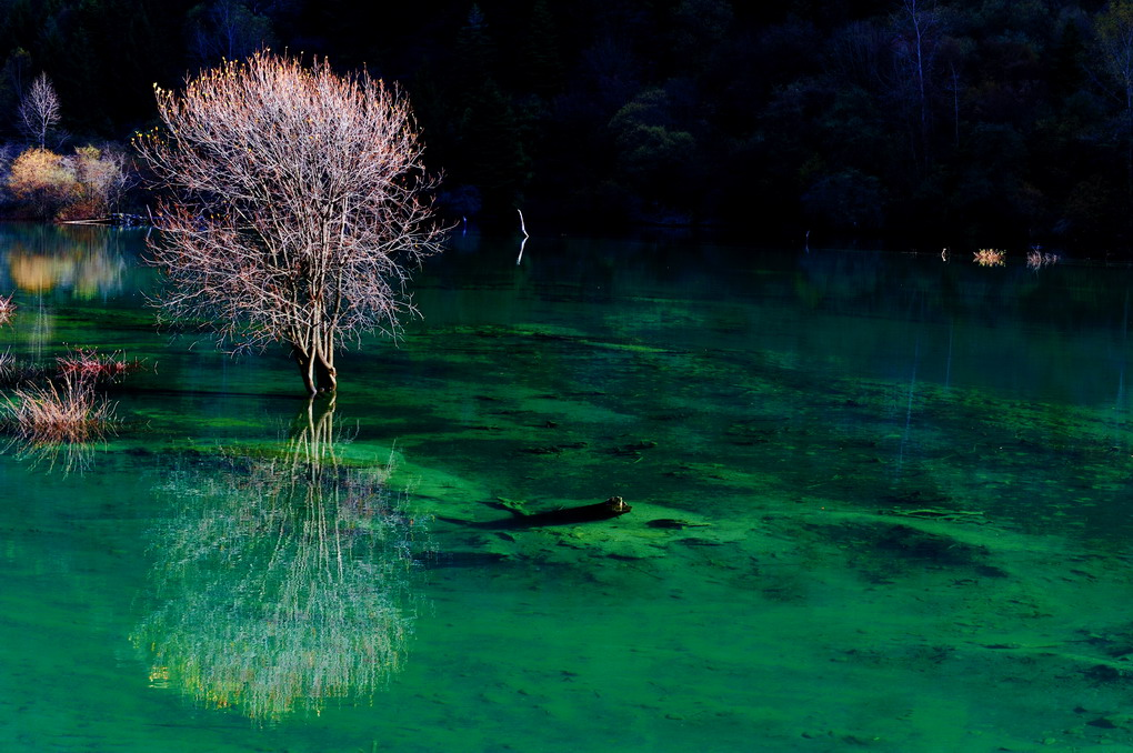 朗摄游作品:湖光影色