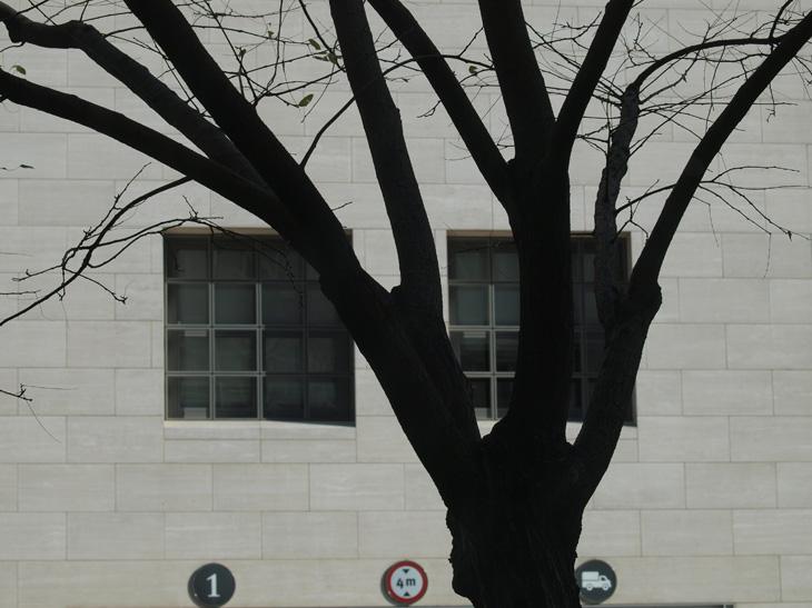 kotea作品:逆光树