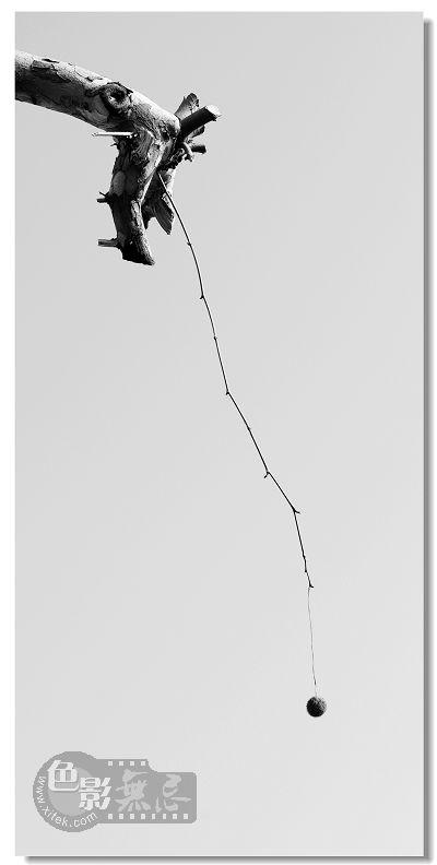 松风摄影作品 秋天的句号
