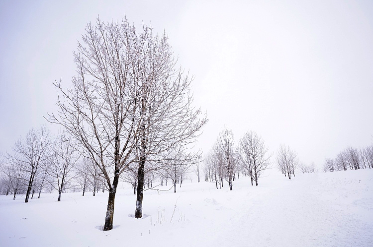 roylgf作品:冬樹