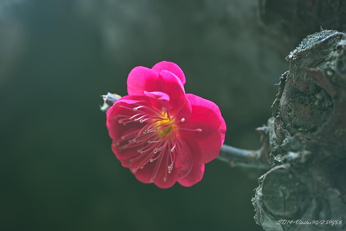 良晨玫景作品:梅花朵朵