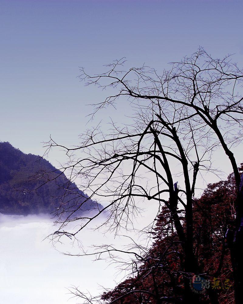 虚风作品:山.云.树