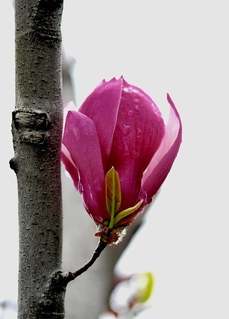 ljc619作品:花