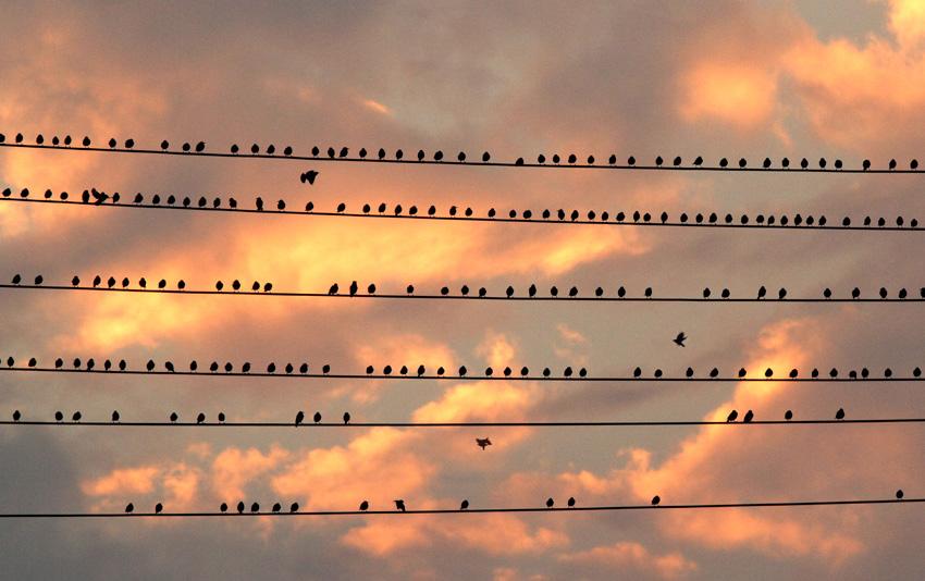 沙锅作品:小鸟乐章
