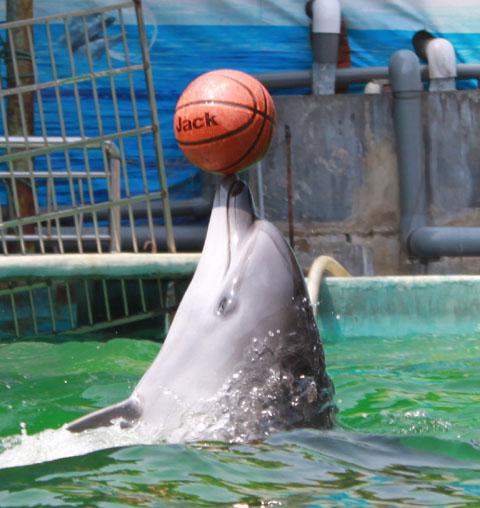 无忌图片论坛 - 海豚顶球