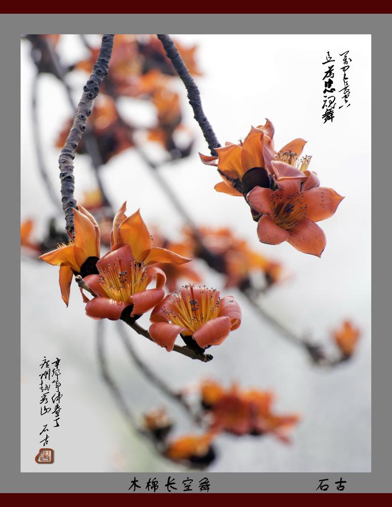 无忌图片论坛 - 木棉花