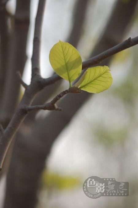 weseeflower作品:新叶