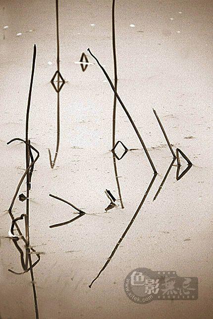 聆听细雨作品:残荷(组图)