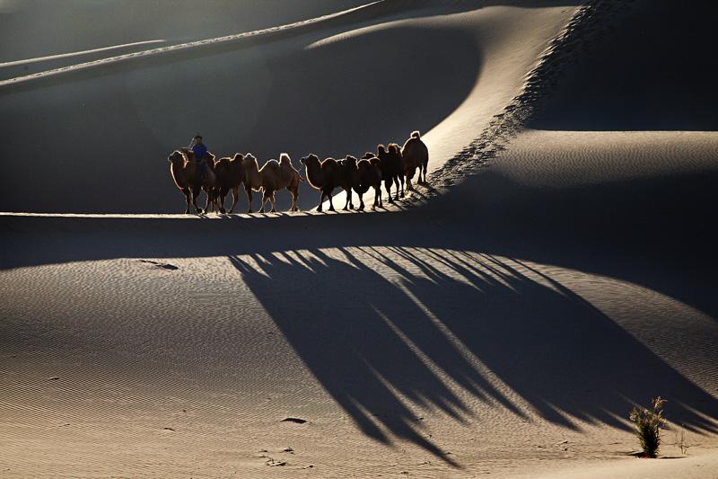 天光映射作品:大漠驼影