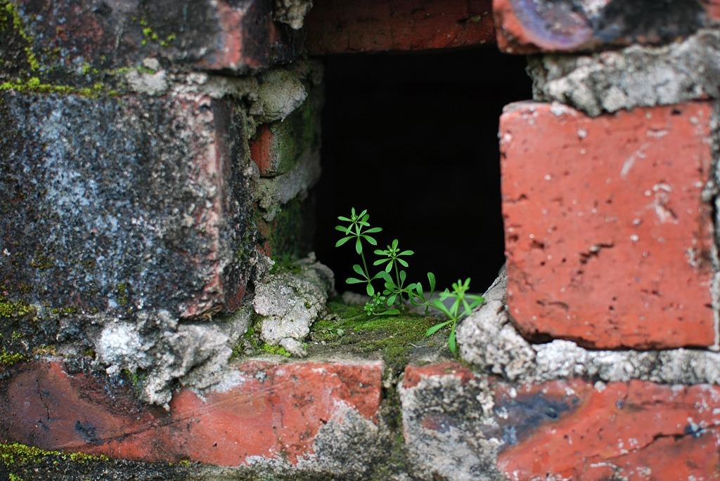 luoren作品:春来了