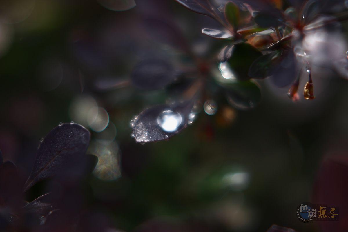 lyw5532作品:采撷珍珠