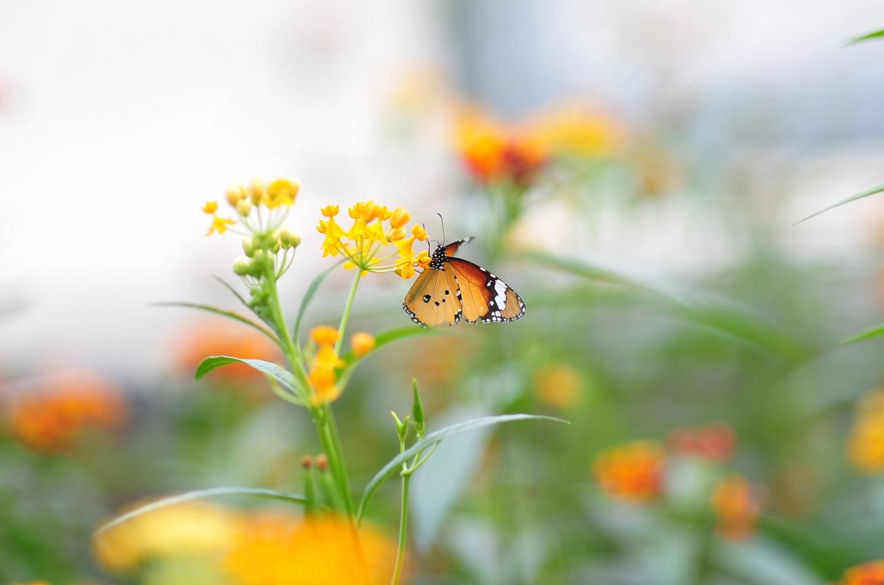 老樊不烦作品:蝴蝶