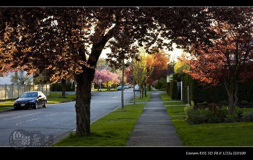 xitekwhywhy作品:暖阳下静静的小街(温哥华)